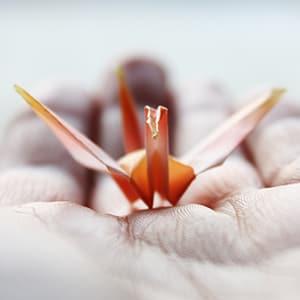 Auf der flachen Hand sitzt ein Insekt und kann wegfliegen, wann es will. Foto Cattari Pons / photocase.de