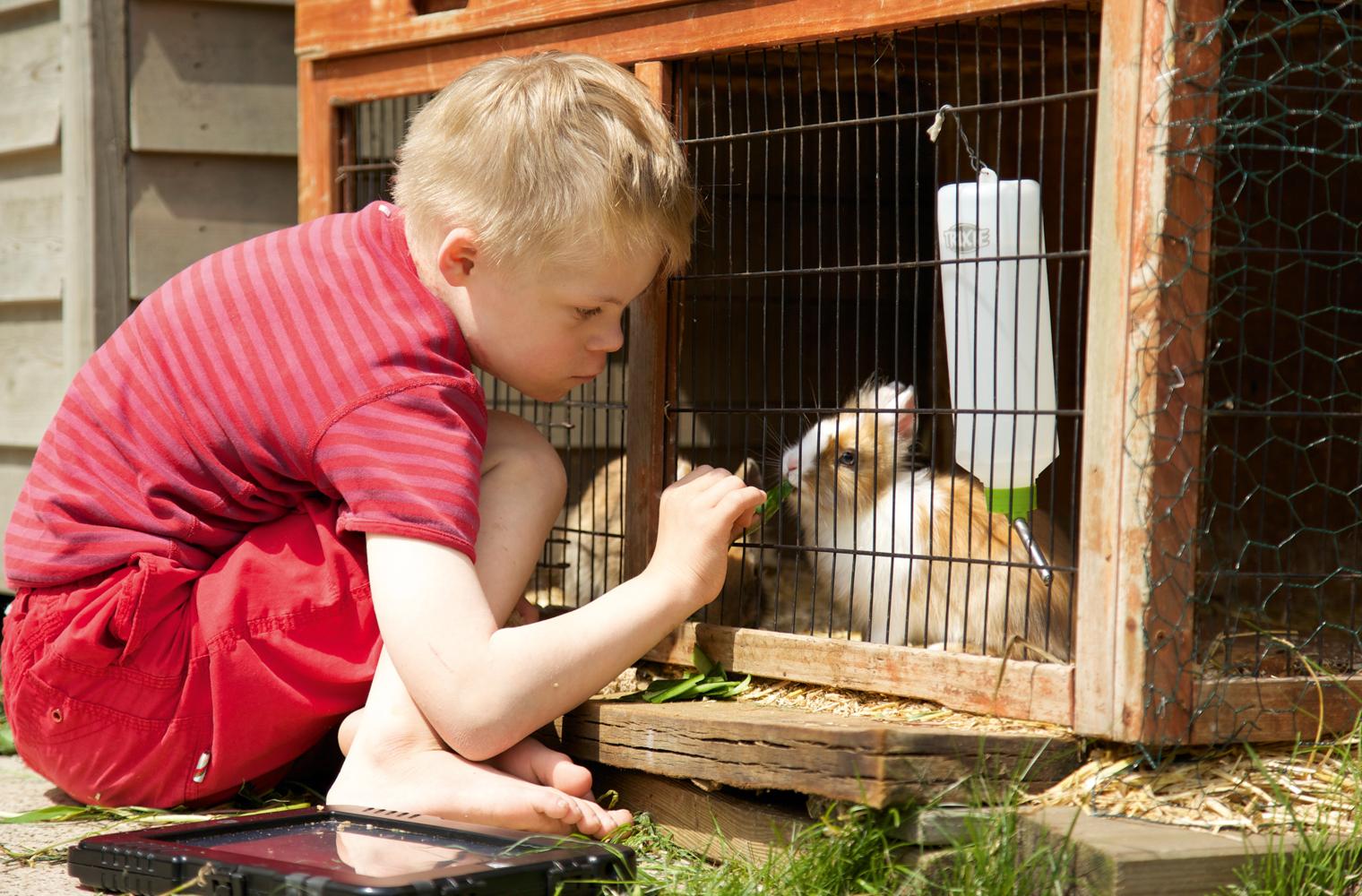 Sohn Willi füttert ein Kaninchen - Foto: Birte Müller